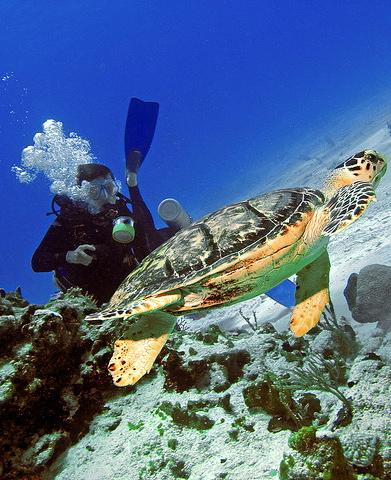 Great scuba diving in Cozumel