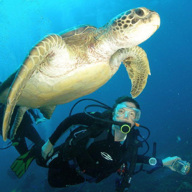 Scuba diving in Fernando de Noronha