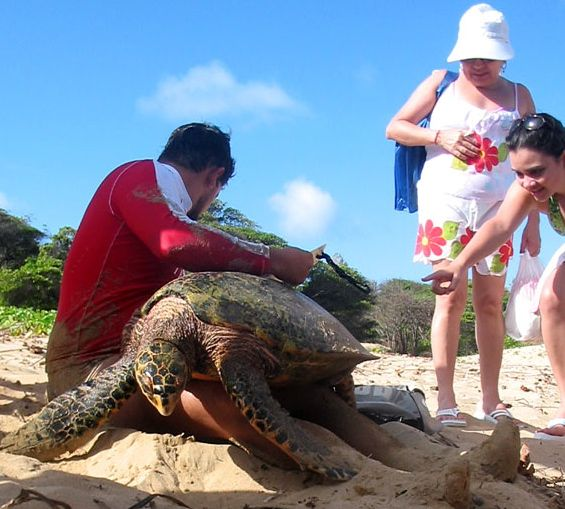 Guided tour of nesting turtles