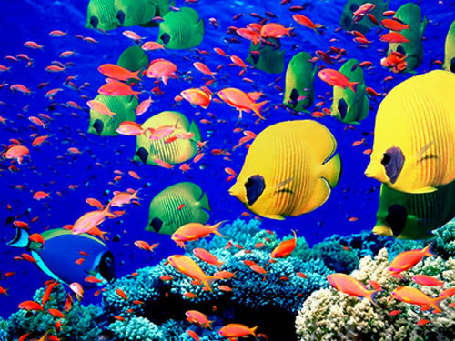 Snorkelling and scuba diving in Cozumel is a main attraction with great coral reefs.