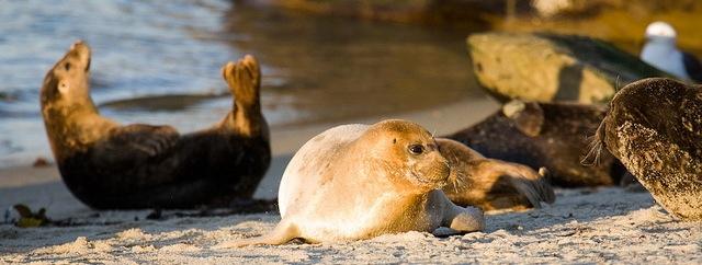 Seals at Children's Beach, La Jolla