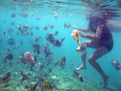Snorkeling at Baby Beach, Aruba