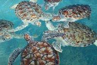 Turtles at Isla Mujeres